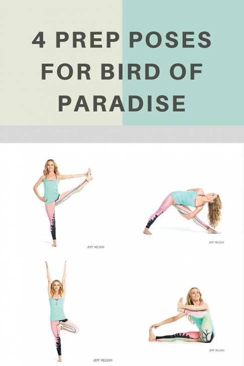 best bird of paradise yoga sequence image