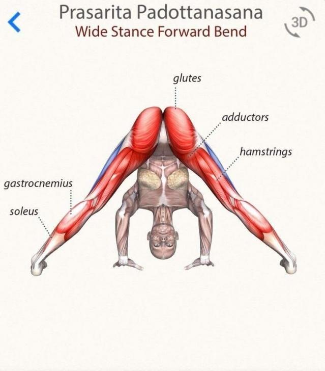 best yoga poses prasarita padottanasana a images