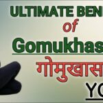Guide Of Yoga Poses Gomukhasana Benefits In Hindi Picture