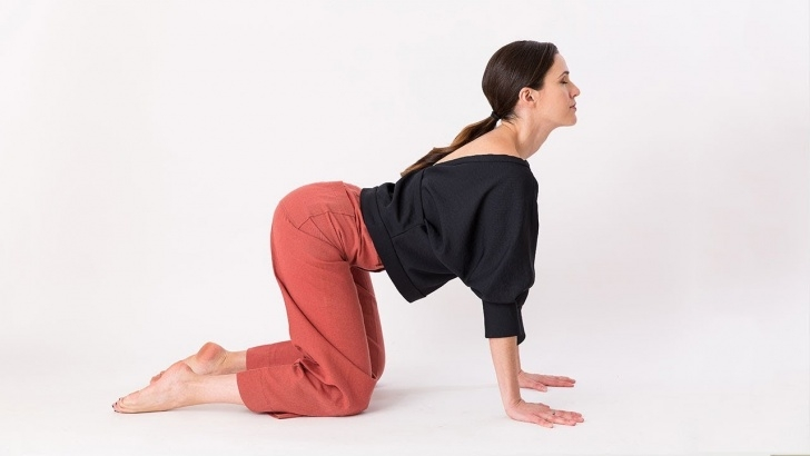 most common cat cow pose images