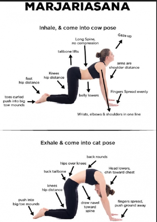 most common yoga poses cat cow stretch benefits image