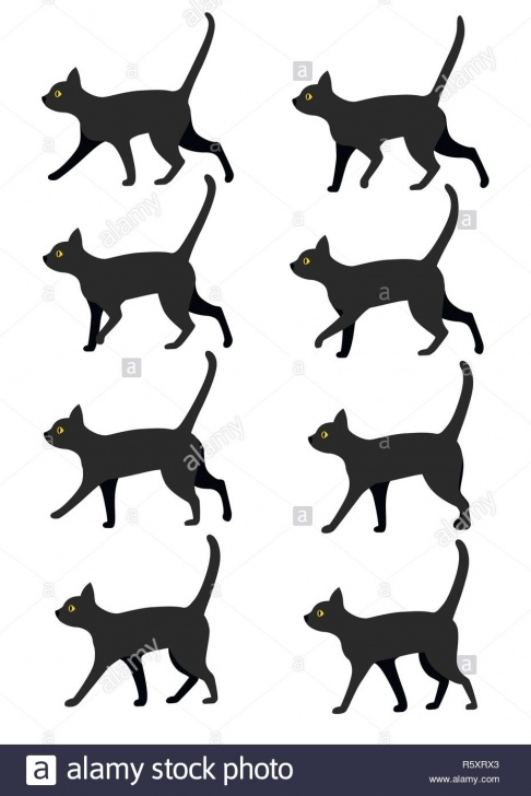 must know black cat poses photos