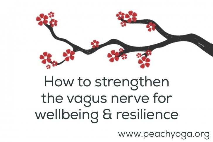 popular yoga poses for vagus nerve picture